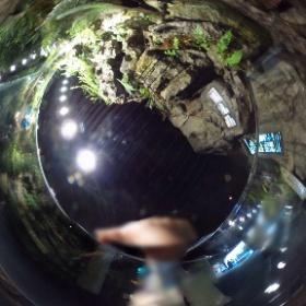 オオサンショウウオ、#京都水族館 #theta360