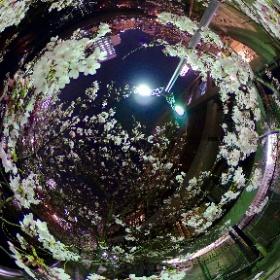 仕事帰りにアクロス天神を通りかかった。なんと、横にある川沿いの桜がまだ7部咲きにも関わらず、絵になる美しさだったので思わず撮影。 満開が楽しみ♪ #夜桜 #福岡 #アクロス天神 #SAKURA #theta360