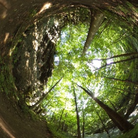 Clifton Gorge offers lush forest, rocky cliffs, trails and Little Miami River in 360 degrees @OhioStateParks #theta360