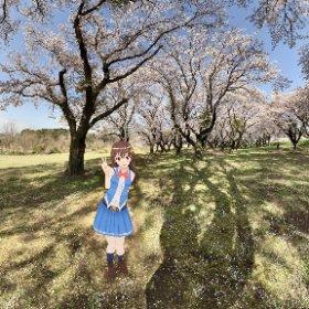 花見のそら #sakura3d