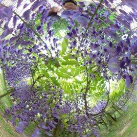 春日大社・萬葉植物園 #theta360