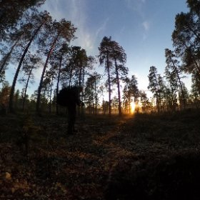 Midsummer Night in the taiga #360 #borealis #theta360