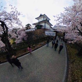 金沢城と桜 #sakura3d #theta360