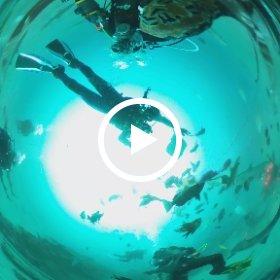 2021/02/23 伊戸、シャークスクランブル #padi #diving #フリッパーダイブセンター #伊戸 #theta #theta_padi #theta360 #群馬 #伊勢崎 #ダイビングショップ #ダイビングスクール #ライセンス取得