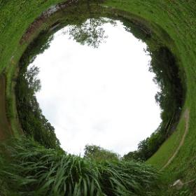 水辺の生態園、ススキの草叢 #firefly3d