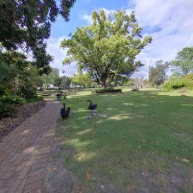 360 spherical black swans at queens gardens perth heritage 1860 interesting icons in virtual tour page https://linkfox.io/tjFIP BEST HASHTAGS  #QueensGardens  #EastPerthWA   #PerthCity  #VisitPerthWA   #WaTourism  #Butterfly3d #theta360