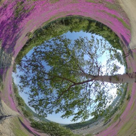 滝上芝桜なう #theta360