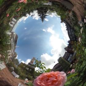 白い恋人パークの薔薇でシータ。