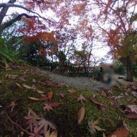 曇っていましたがキレイな紅葉が見られた箱根板橋の老欅荘 #theta360