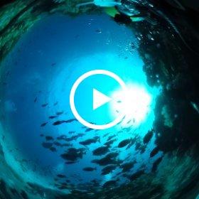 水中ダイビング(沖縄県慶良間諸島沖山礁)