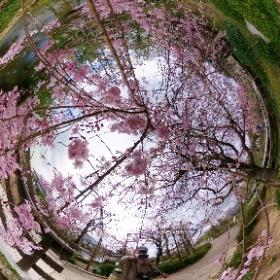 みずの森 2021/04/03