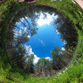 2. Собираем землянику в лесу. Максатихинский район.  15.07.2018г. #theta360