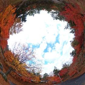 #平川市 #猿賀公園 #紅葉情報 池まわり園路はだいぶ散ったけど、東屋まわりはまだまだ見頃で素晴らしい紅葉ー!風もあまりなく穏やかなせいか、若干雲ありの秋空と最高のコラボ。#全天球 #猿賀神社 #紅葉 #theta360