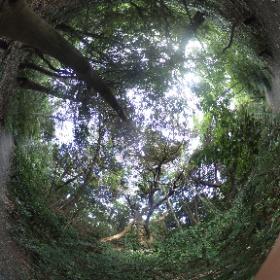 森林浴は心と体を癒しますね。 自然教育園に行ってきました。とても癒されました。 ドイツ式カイロプラクティック逗子整体院 www.zushi-seitai.com  #theta360