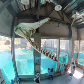 polar-bear and bones at the Salt Lake City Hogle Zoo Utah #theta360