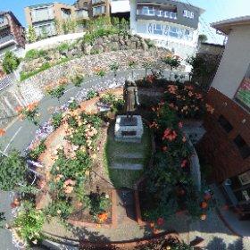アンネのバラ開花状況5月23日 今日も暑くなりそうです。 28日 「アンネの日記」出版70年記念 平和の集い #theta360