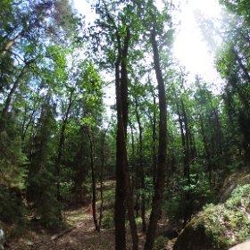 Paraplyträd nr 3 i Skarnhålans gammelskog. Genom att sponsra trädet så skyddar du det och dess närmaste omgivning för evigt. https://naturarvet.se/paraplytrad-och-skogsrutor-i-skarnhalan/ #theta360