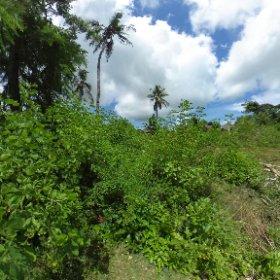 Sekundärvegetation auf der Insel Nosy Faly, Region Diana, Nord-West-Madagaskar, März  2019