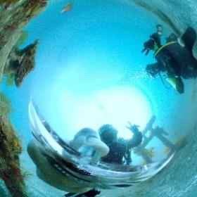 2021/03/20-21 大瀬崎 OWD #padi #diving #フリッパーダイブセンター #大瀬崎 #theta #theta_padi #theta360 #群馬 #伊勢崎 #ダイビングショップ #ダイビングスクール #ライセンス取得