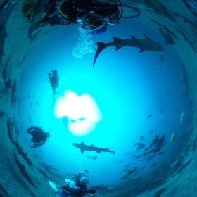 2019/03/24 南房総・伊戸 シャークスクランブル #padi #diving #フリッパーダイブセンター #伊戸 #theta #theta_padi #theta360