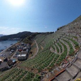 宇和島市遊子(ゆす)の段々畑、なう。急な斜面を切り開いて作られた畑、です。 #theta360