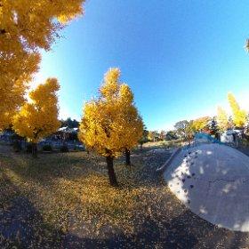 散歩コースの西草深公園は秋色真っ盛り。 #theta360