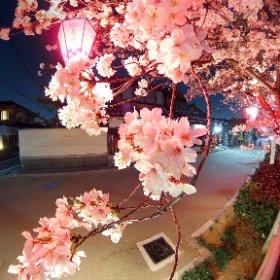 久宝寺柳橋の夜桜2018 2018.03.28撮影 #theta360