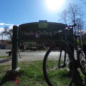 Dude. Chillin. #vancouver #cityofvan #eastvan @cbcstephenquinn #sunshineatlast #theta360