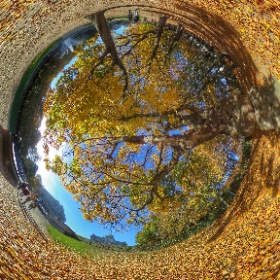 Autumn in Brussels #momiji3d #theta360