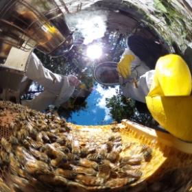 アピモンド 能登の養蜂家をたずねる。