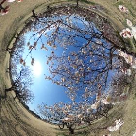 偕楽園公園田鶴鳴梅林の様子です。 #theta360