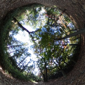 2020/12/1、石神井公園 野鳥誘致林より #theta360