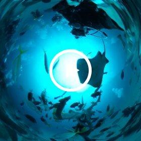 2020/02/16 伊戸・シャークスクランブル #padi #diving #FLIPPER-dc #フリッパーダイブセンター #伊戸 #theta #theta_padi #theta360 #群馬 #伊勢崎 #ダイビングショップ #ダイビングスクール #ライセンス取得