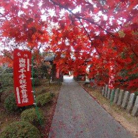 紅葉 #momiji3d #theta360