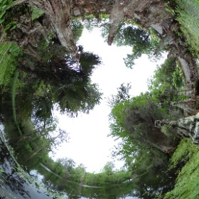 Charleston, SC Magnolia Plantation Audubon Swamp Garden April 2016 #sakura3d  #theta360