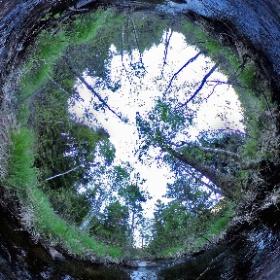 Paraplyträd nr p32 i Skarnhålans gammelskog är en bäck. Genom att sponsra 30 m av Svällebäcken så skyddas den och dess närmaste omgivning för evigt. https://naturarvet.se #naturarvet #gammelskog #naturvård #skyddadnatur #natur #paraplyträd #bäck #fadder
