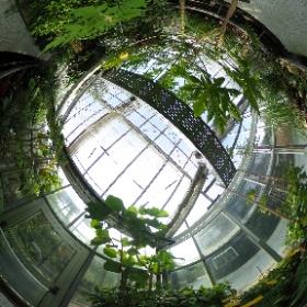 Haus 3 im Botanischen Garten in Regensburg: Hier wächst der Pfeffer.
