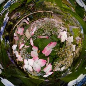 この360度写真の花も、静岡県森町香勝寺で咲いていた花です。名前が分かりません。誰か教えてください。  ちなみにこの360度画像もTHETAプラグイン「タイムシフト」を使用しています。#rain3d #theta360