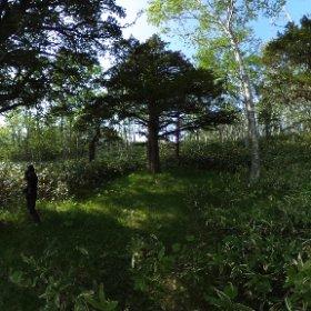 [360度撮影]知床半島・オンコ公園 #theta360