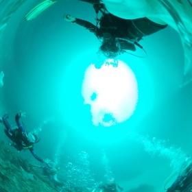 2020/06/21伊豆海洋公園 #padi #diving #フリッパーダイブセンター #IOP #theta #theta_padi #theta360 #群馬 #伊勢崎 #ダイビングショップ #ダイビングスクール #ライセンス取得
