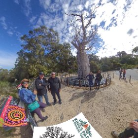 360 spherical Boab Tree (Gija Jumulu) 750+ yr old at 2 rivers lookout Kings Park, SM hub https://linkfox.io/4kUQ8 BEST HASHTAGS  #BoabTreeKingsPark  #KingsParkWA   #PerthCity  #VisitPerthWA   #Butterfly3d   #WaTourism  #WaAchiever #theta360