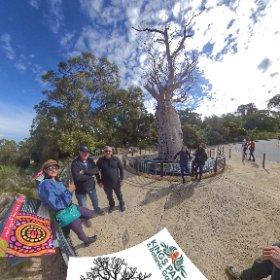 360 spherical Boab Tree (Gija Jumulu) 750+ yr old at 2 rivers lookout Kings Park, SM hub https://linkfox.io/4kUQ8 BEST HASHTAGS  #BoabTreeKingsPark  #KingsParkWA   #PerthCity  #VisitPerthWA   #Butterfly3d   #WaTourism  #WaAchiever #theta360