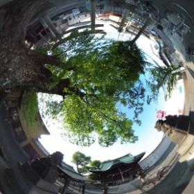 是政八幡神社(東京)。ご神木の迫力があります。  photo : 360度カメラ研究会(http://camera-360do.com/) by ほーりー