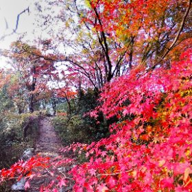 360 Photo Walk in IKOMA Mountain Range, 龍尾寺 参道の紅葉 #momiji3d #IKOMA_Nature_Walk #JAPAN Autumn Foliage 2018 #theta360