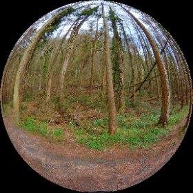 Llanerchaeron woodland #theta360 #theta360uk