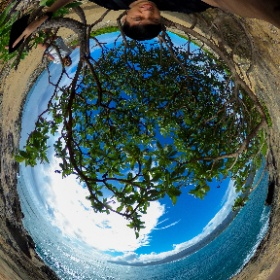 Hiding under a Tree ! #Hawaii