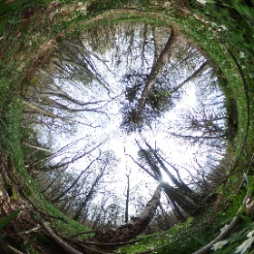 Wood Anemones at Flatropers Wood, Sussex Wildlife Trust Reserve. https://sussexwildlifetrust.org.uk/visit/flatropers-wood