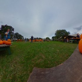 Pumpkin patch at Wyevale Garden Centre 1 #theta360 #theta360uk