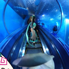 八景島シーパラダイスのトンネル #miku360 #theta360