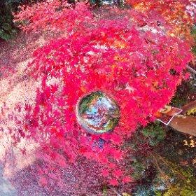 360 Photo Walk in IKOMA Mountain Range,むろいけ園地中堤 #momiji3d #IKOMA_Nature_Walk #JAPAN Autumn Foliage 2018 #theta360
